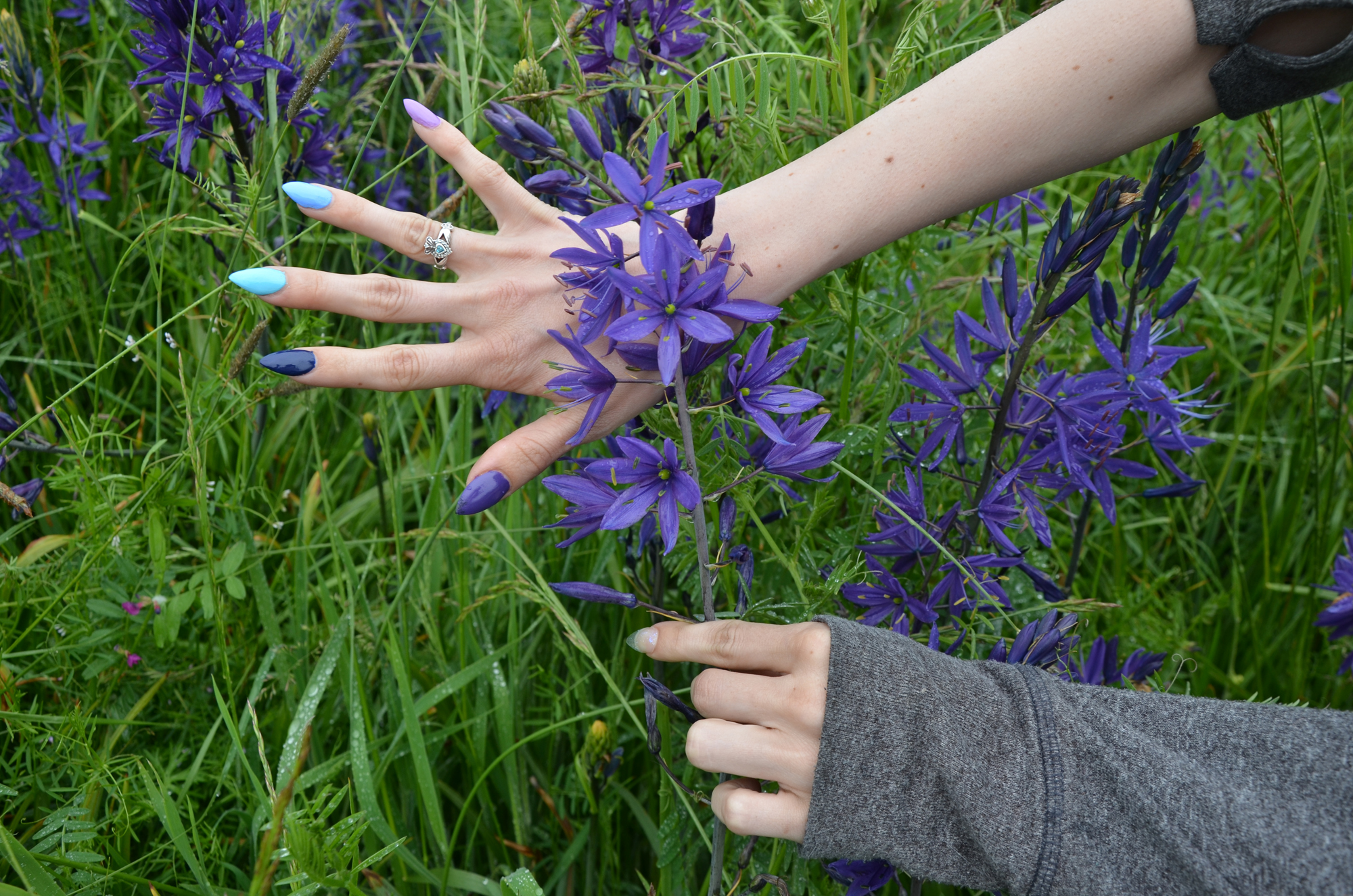 Native Plants To Oregon Part - 23: 9420_Brownsville_Deep_Purple